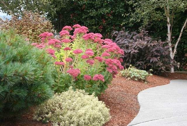 Combinar plantas de otoño, 6 estrategias - http://jardineriaplantasyflores.com/combinar-plantas-de-otono-6-estrategias/