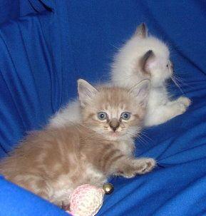 big cat rescue org