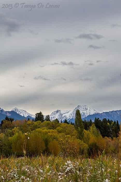 Autumn in the Columbia Valley  http://tanyadeleeuwphotography.blogspot.ca/2013/10/fall-in-columbia-valley.html