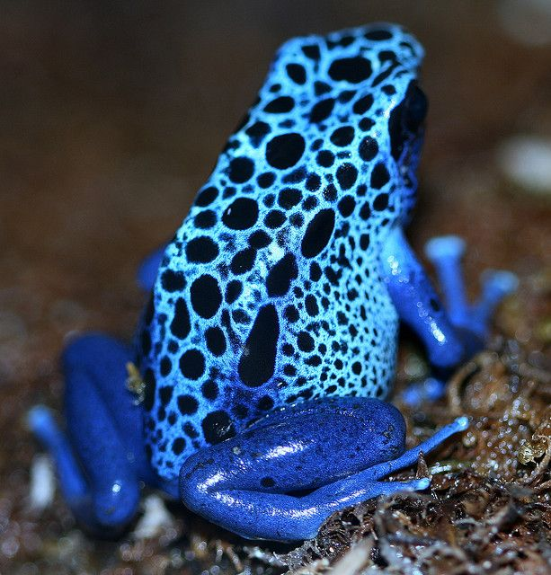 how to avoid a dart frog