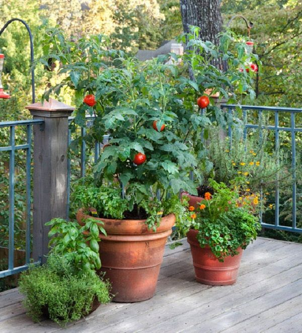 más de 25 ideas increíbles sobre cultivar tomates en pinterest