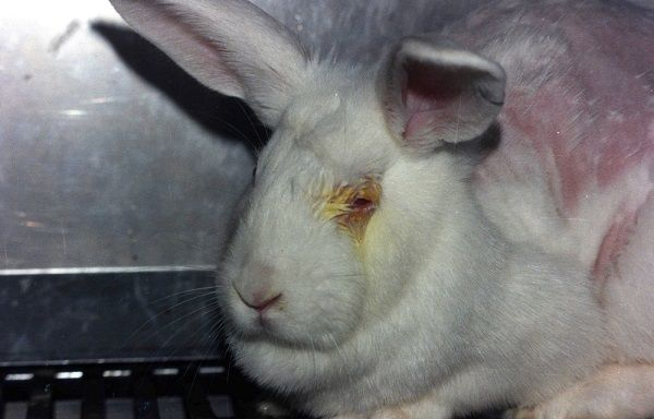 animal testing arguments against testing Animal testing and the law the use of animals in laboratories often amounts to  legally-sanctioned animal abuse the secrecy with which animals in.