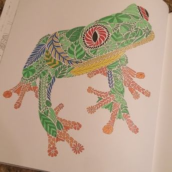 Red Eyed Tree Frog2 343x343 FrogTree FrogsAdult ColoringColoring BooksBook ReviewsAnimal KingdomRed