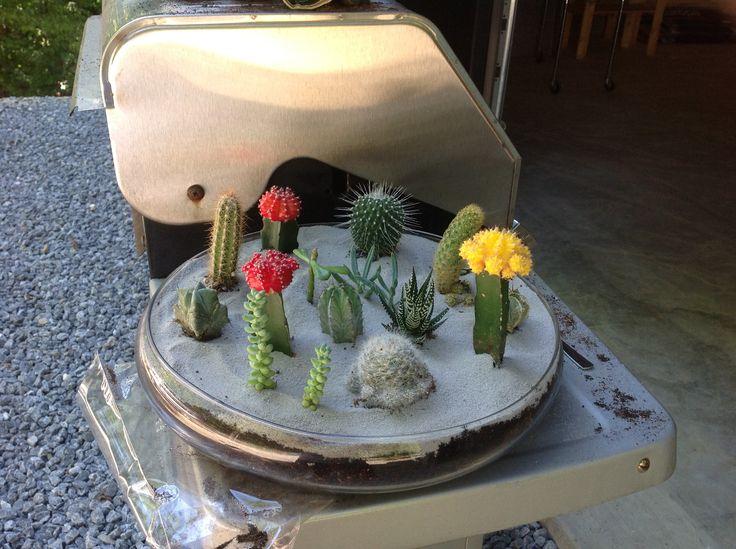 mini jardin de cactus et plantes grasses terrarios. Black Bedroom Furniture Sets. Home Design Ideas