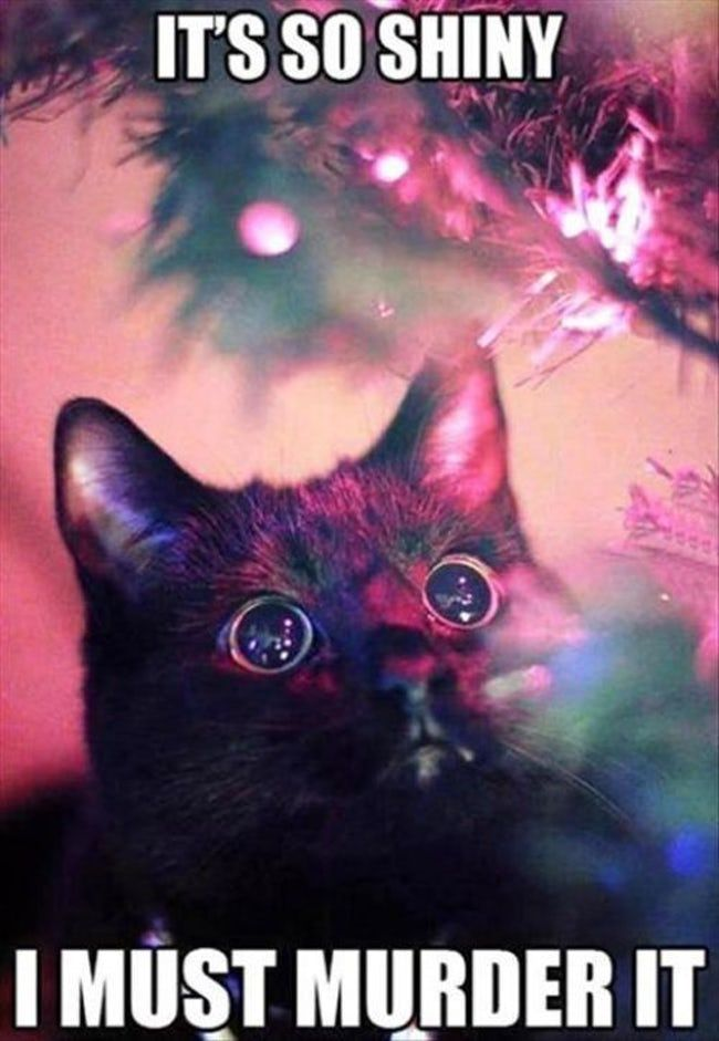 .29 Cats Who've Had It With the Christmas Tree. Cats are a mystery to us, bu… – Funny Cats