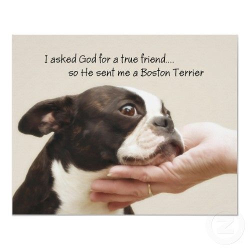 Reminds me of my girl, chyna. She was the best. Boston Terrier... best friends...