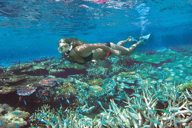 Snorkeling grande barriera corallina