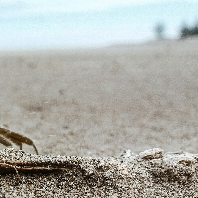 . . . . . . . . . . #photographer #mar #photography #playa #arena #Sand #bich #afternoons #amazing #instafollowers #fun #freedom #smile #happydays #picoftheday #océano #Veracruz #landscape #feliz #cangrejo #fotografía #coloresdemexico #crab #instamoment #Instagram
