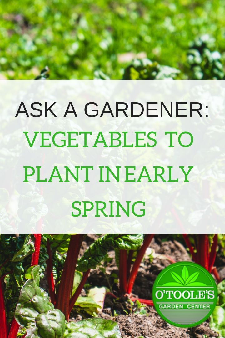 As We Start To Get Teasing Peaks Of Spring You Might Find Yourself Eyeing Your Veggie Garden And Getting Veggie Garden Companion Gardening Air Cleaning Plants
