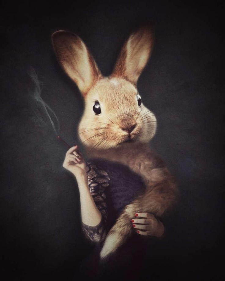 Kaninchen-Print, ungewöhnliche Kunst, Bunny Kunst, dunkle Kunst, anthropomorphe Kunst, Fotoabzüge, schrullige Art, skurrile Kunst, lustige Kunst, Wandkunst, Inneneinrichtungen von AimeeMarieArt auf Etsy https://www.etsy.com/de/listing/506028418/kaninchen-print-ungewohnliche-kunst