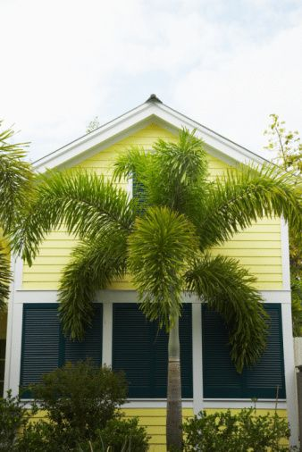 How Close to Plant Foxtail Palm Trees | Hunker