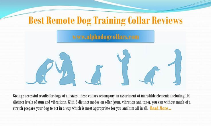 dog training collars with remote:-  Giving successful results for dogs of all sizes, these collars accompany an assortment of incredible elements including 100 distinct levels of stun and vibrations. With 3 distinct modes on offer (stun, vibration and tone), you can without much of a stretch prepare your dog to act in a way which is most appropriate for you and him all in all. Read More at https://www.alphadogcollars.com/