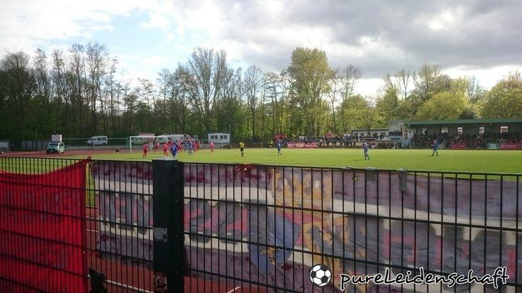 FC Schalke 04 II - Rot-Weiss Essen (0:0) || Regionalliga West || 23.04.2016 #antige #schalke #s04 #tuhds04 #rotweissessen #nurderrwe #essen #rwe #regionalliga #west #fussball #germany #deutschland #ultras #fans #sport #f4f #follow4follow #l4l #like4like #likeforfollow #amazing #bestoftheday #picoftheday #igdaily #pureleidenschaft by pureleidenschaft
