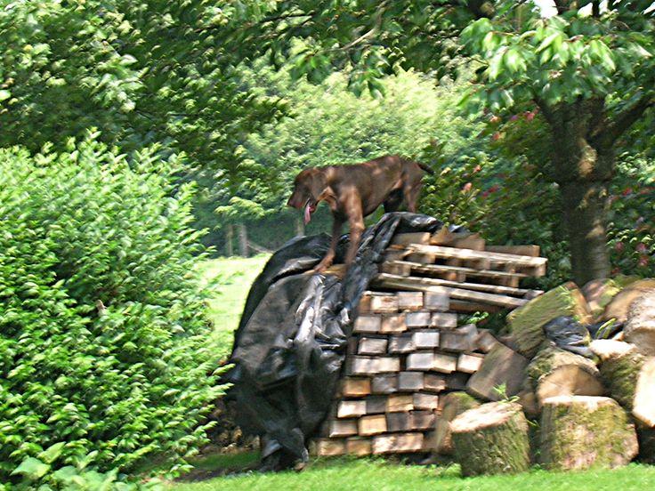Ebbo op de houtstapel
