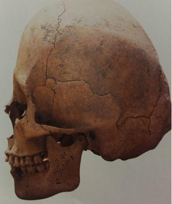 aspecto fisico de los mayas deformacion craneal