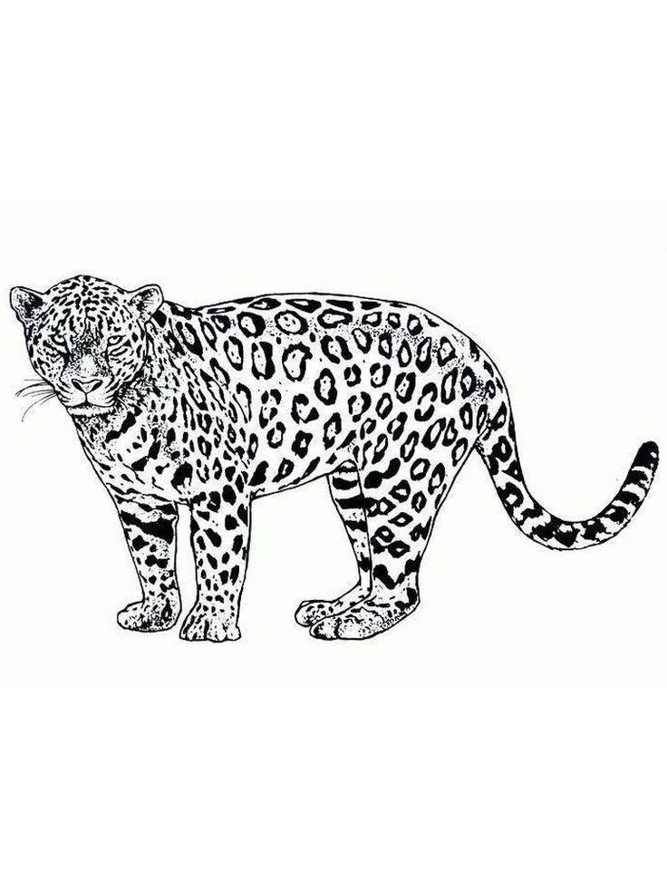 Cheetah Coloring Page Printable Malvorlagen Tiere Afrikanische Tiere Tiervorlagen