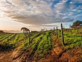Vineyards against the skyline at Uva Mira.