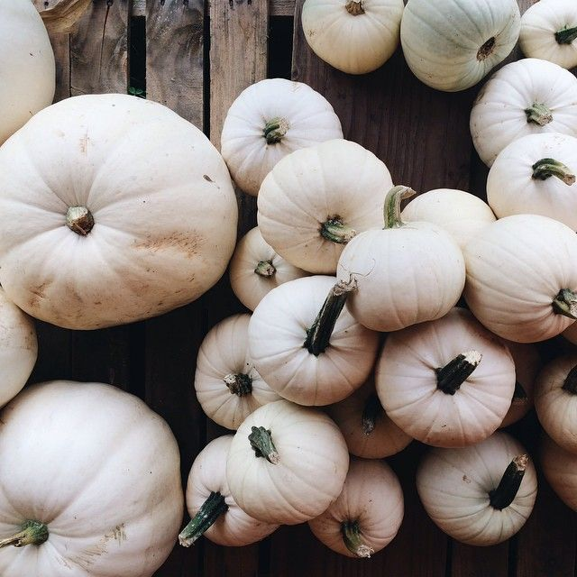 white pumpkins:
