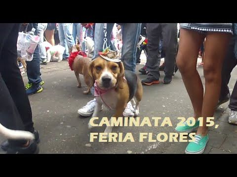 Caminata Canina Feria de las flores 2015