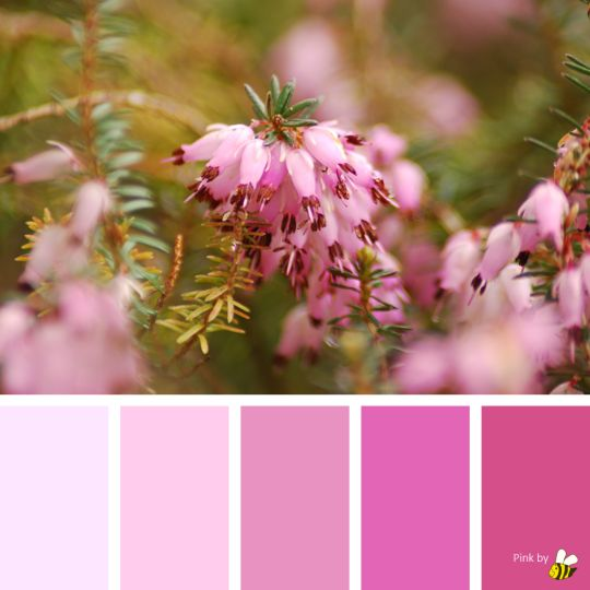 Pink palette by BeeBox (ONLY FOR PERSONAL USE!)