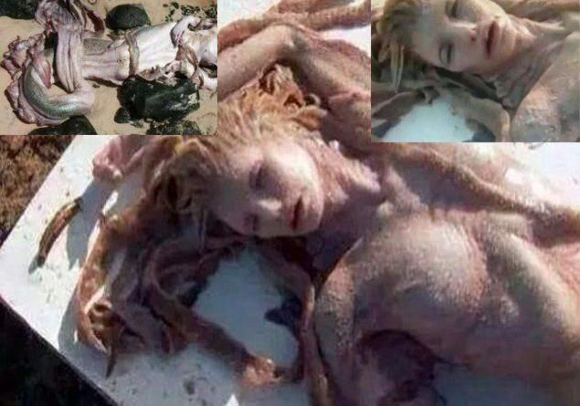 A Mermaid is found along a beach of Kilauea Falls, Hawaii. Unfortunately she already passed away. These pictures are really stunning and we honestly ...
