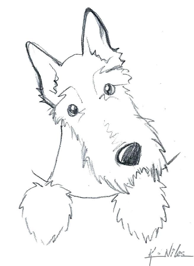 Scottie Dog Coloring Page Dog Coloring Page Surprising Dog Drawing