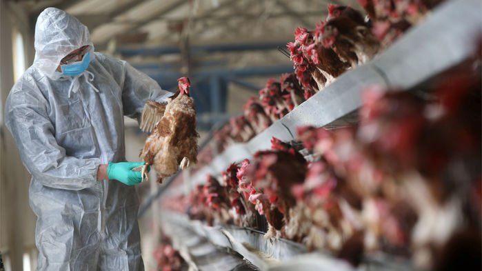 An avian influenza virus that emerged in 2013 is suddenly spreading widely in China, causing a sharp spike in human infections and deaths. Last month alone