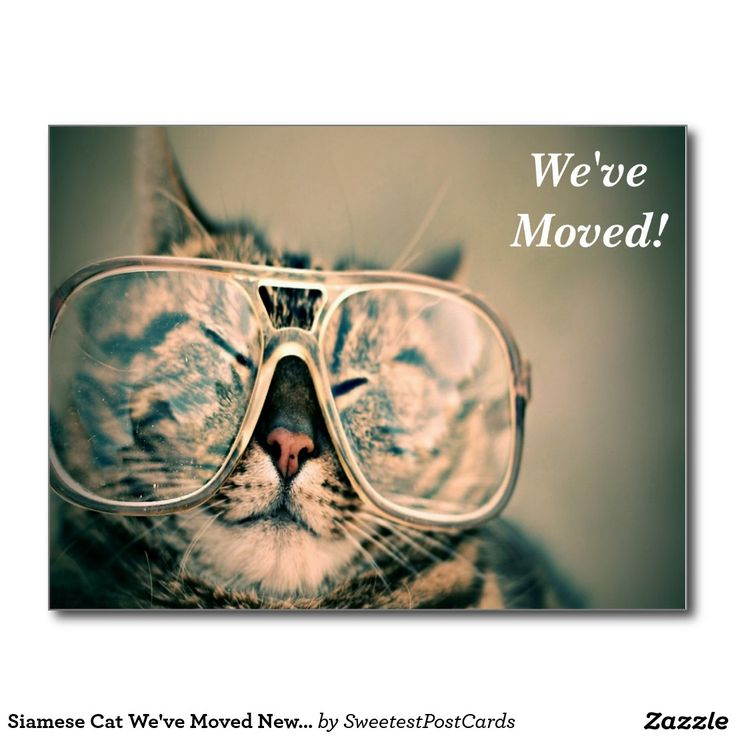 Siamese Cat We've Moved New Address Postcard  This design features a Siamese Cat wearing a pair of glasses looking at you.This postcard would be great for any one who has or are going to move to a new address. Click the Customize It button to add your own text or images to create a unique one of a kind design! Get creativeOn this postcard