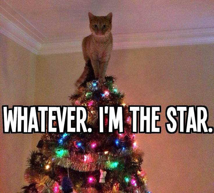 Whatever I'm the star cat on christmas tree funny lol hilarious