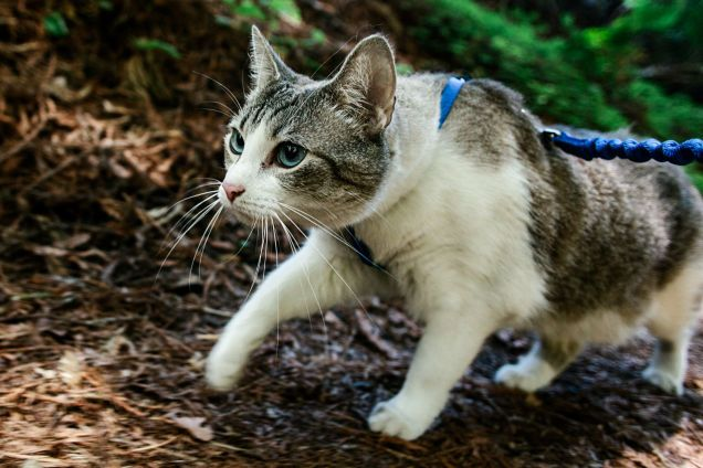 How To Take Your Cat Camping: Do you camp with your cat? Check out this guy's camping/hiking adventure with his cat, Finch.