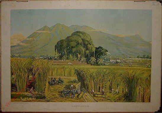 Ons schoone Indie 6 - Suikerplantage