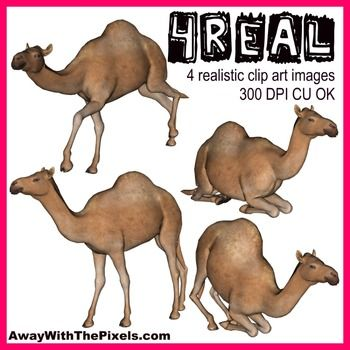 4 Real! 4 Realistic Camel Clip Art Images - Commercial Use OK!