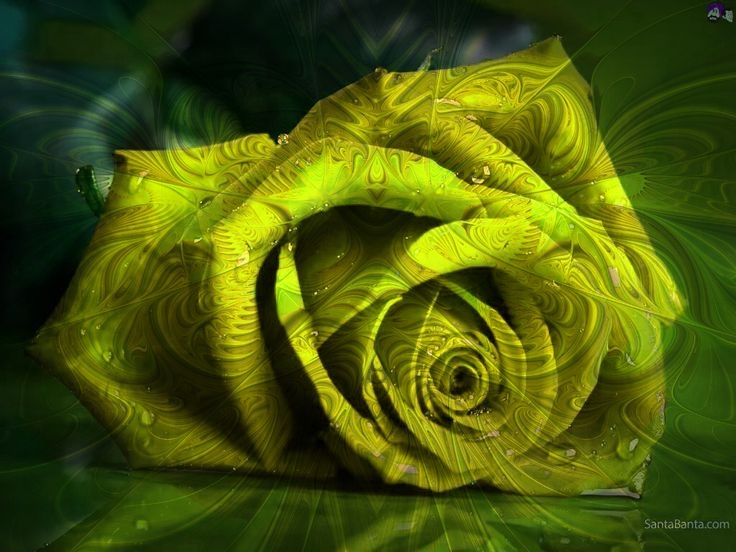 #CALARTNZ: A patterned green rose. How would you like a bunch of these beauties on you dining room table?