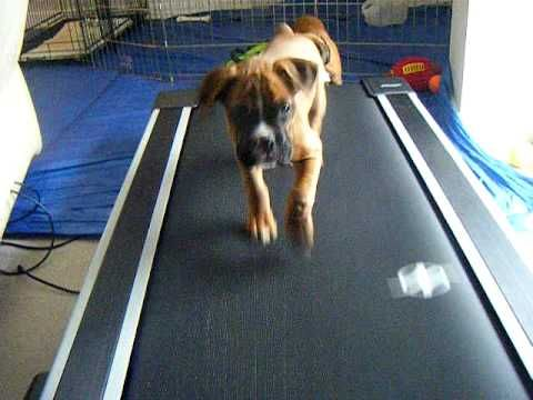 Treadmill motivation: Puppies. Go!