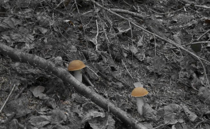 Mushrooms in the forest.
