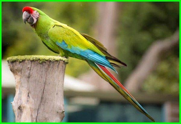 Daftar Harga Burung Macaw Termurah Hingga Paling Mahal Daftarhewan Com Di 2020 Hewan Piaraan Ikan Mas