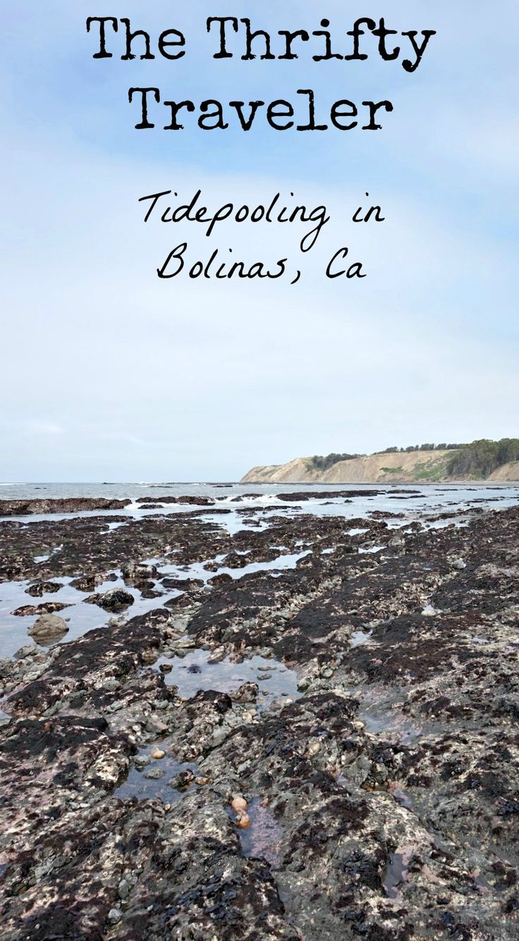 Best 25 bolinas beach ideas on pinterest beach style saunas if youre spending time near stinson beach or bolinas a visit to duxbury reef is a great alternative to the beach budget friendly day trips from the san nvjuhfo Image collections
