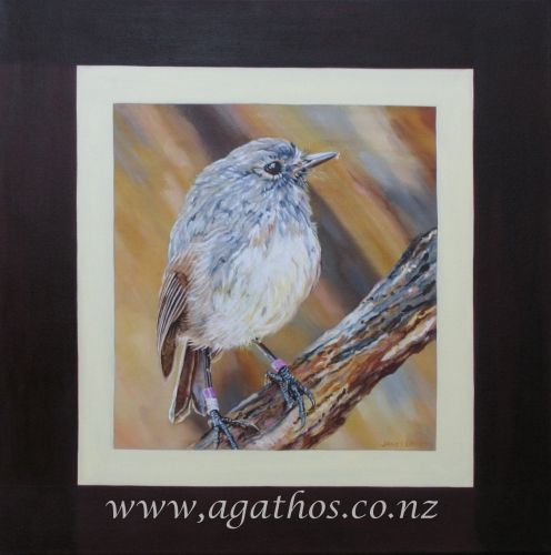 New Zealand South Island Robin.jpg