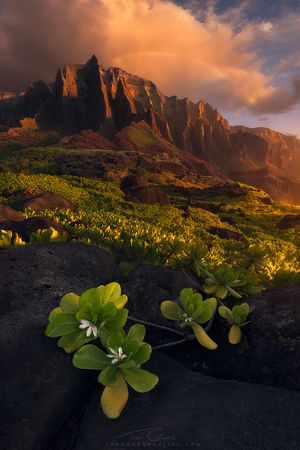 In this image from Kauai, the greens of the Naupaka, the red/orange of the cliff…