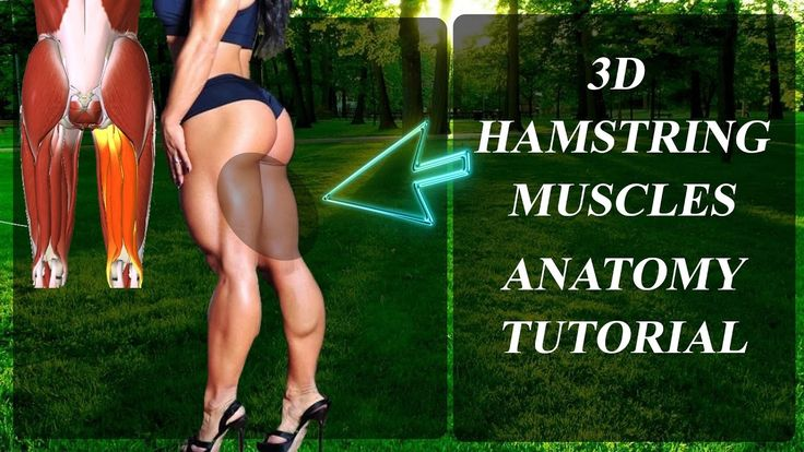 ARKA BACAK Kasları 3D İskelet Anatomisi | ANATOMY HAMSTRING |ENG.SUB.