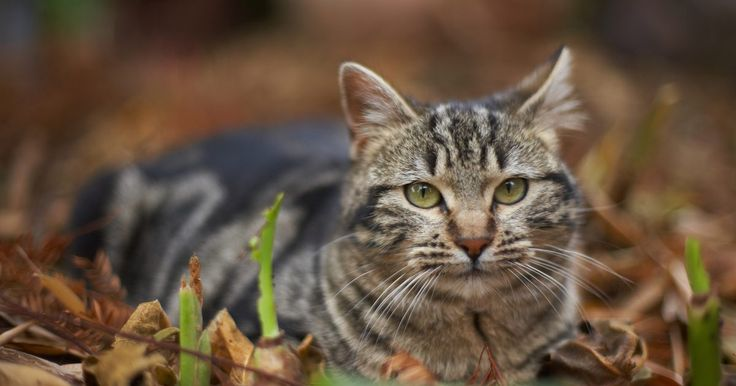 Como se livrar de gatos selvagens em seu jardim. Mesmo que gatos selvagens caminhando por seu jardim seja fofo, eles são incômodos. Eles vasculham as latas de lixo, roubam a comida de seu animal de estimação e espalham doenças e parasitas. Livrar seu quintal de gatos selvagens precisa de determinação e diligência, mas o bem estar de seus animais de estimação e de sua família vale todos os ...