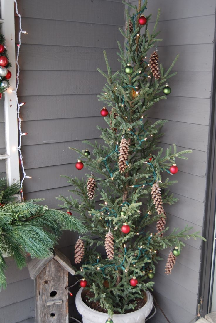 Best 25 Slim Christmas Tree Ideas On Pinterest Pencil