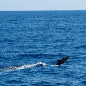 Dolphin encounter during WEPA expedition