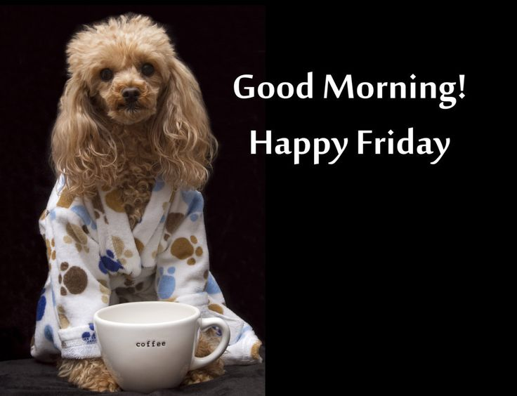 Good Morning On Friday : The best good morning happy friday ideas on pinterest