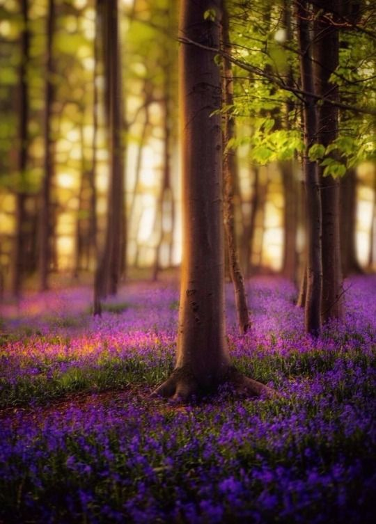 Beautiful Forest Flowers Nature Flowers Nature