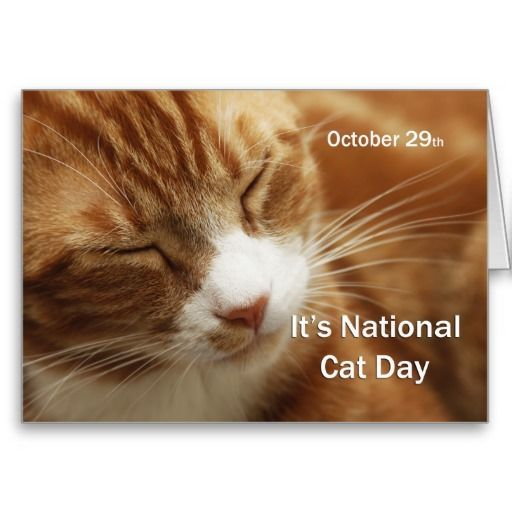 National Cat Day October 29 Greeting Cards