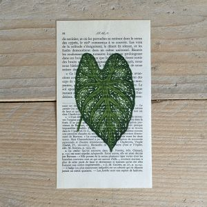 acacia blad acaciablad print franse frans vintage oud pagina bladzijde poster Het Noteboompje