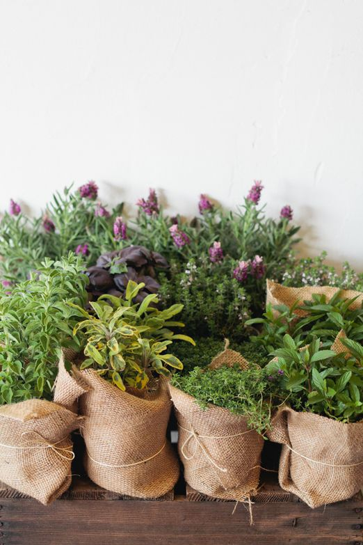 Hessian and twine wrapped potted herb wedding favours http://thenaturalweddingcompany.co.uk/blog