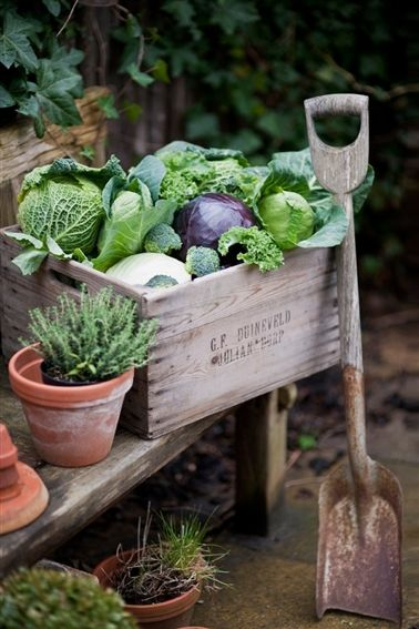 Wooden crates for carrying the garden's bounty.
