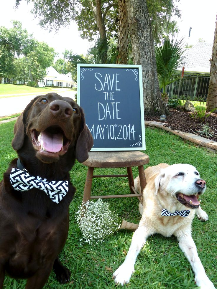 dogs dating